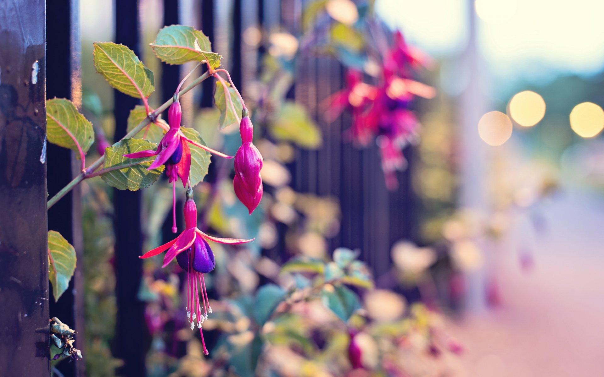 Обои забор, улица, цветы. Города foto 10