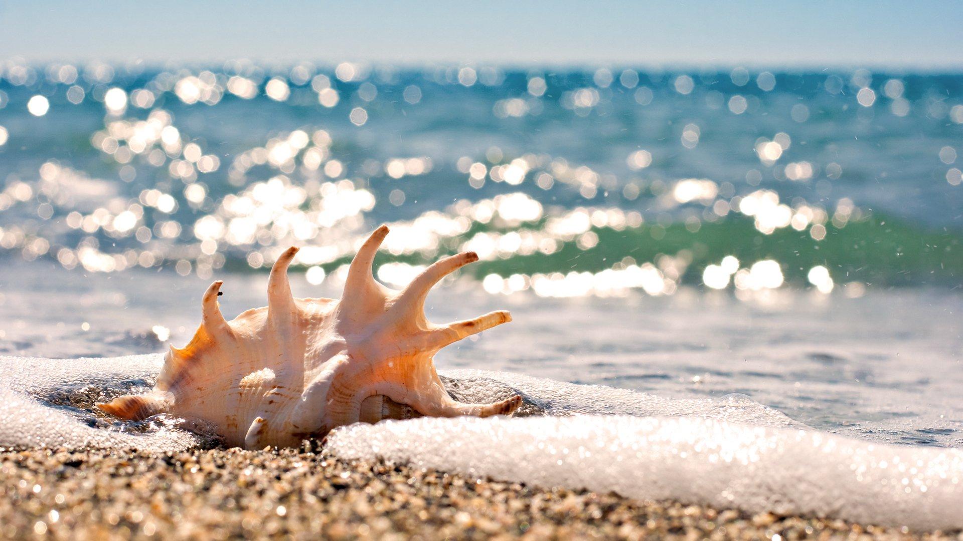 Открытка лето море, днем рождения внучке