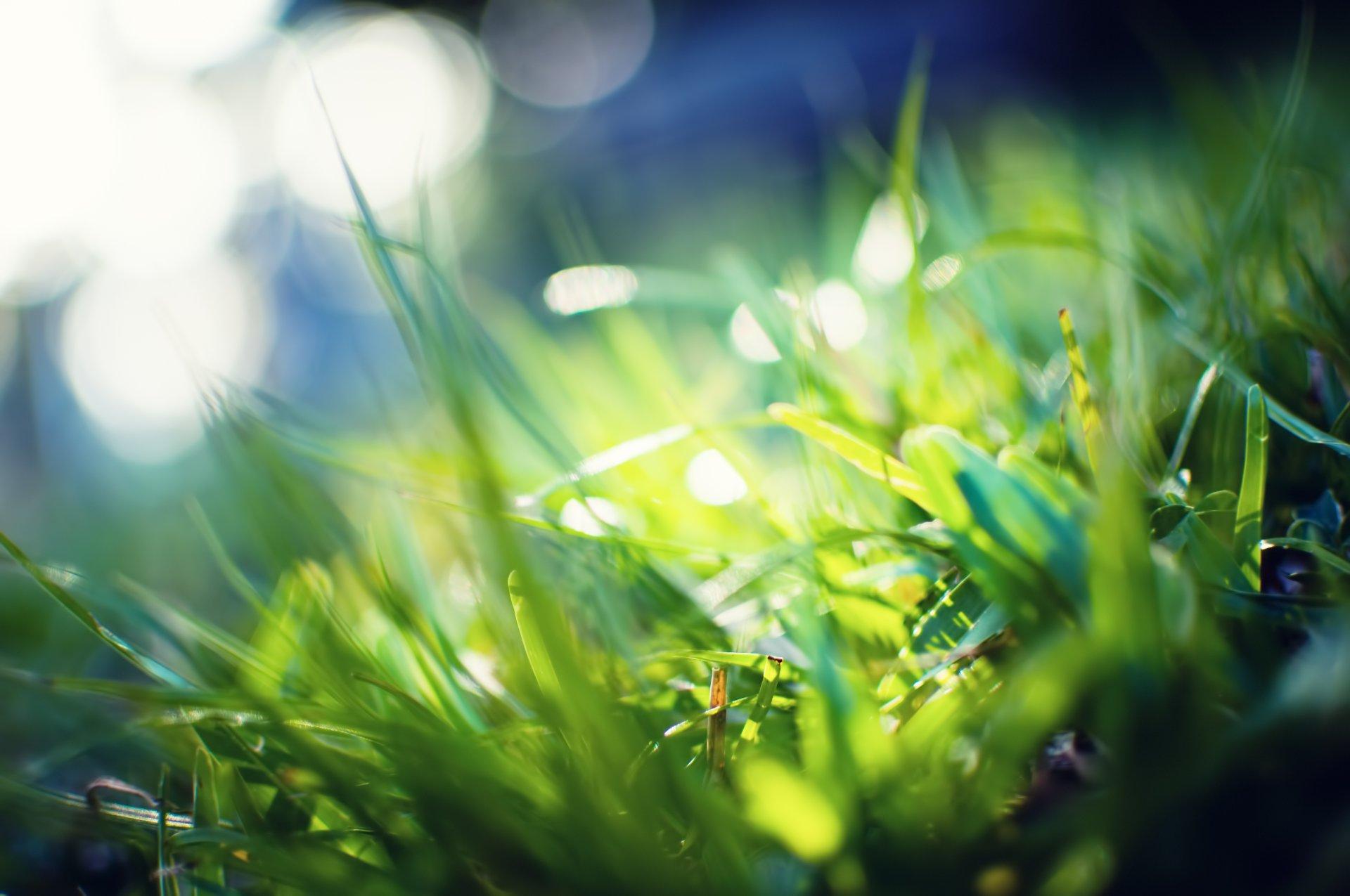 кети лучи солнца на траве картинки рождения начальника