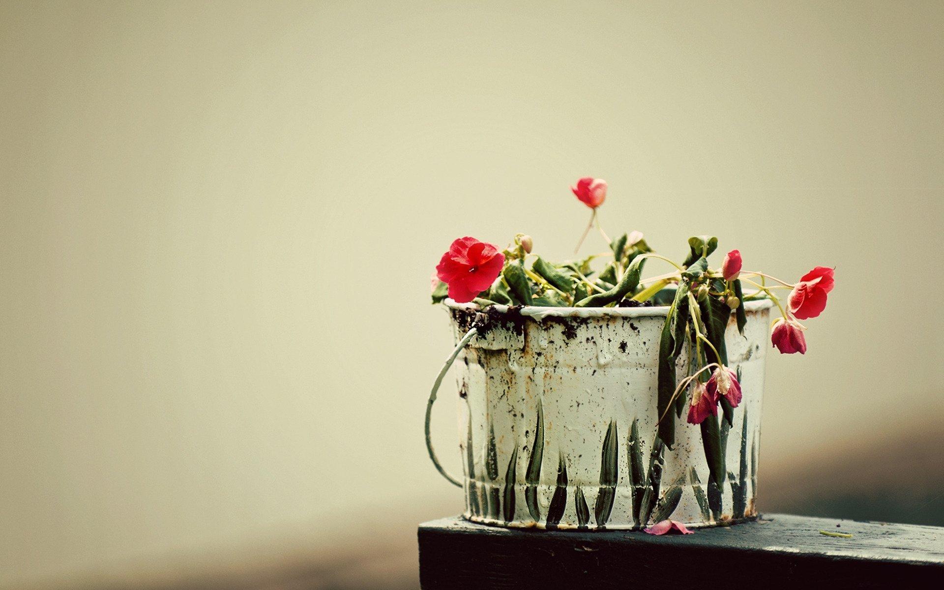 природа цветы ведро  № 464543 без смс