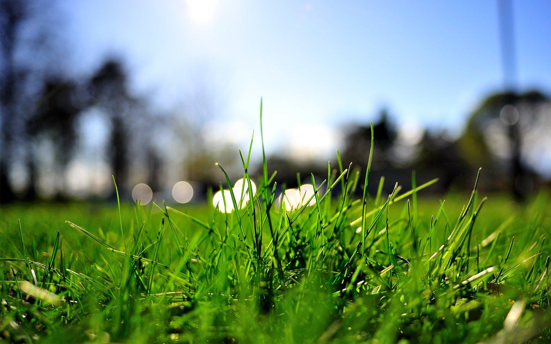 трава вода лето скачать