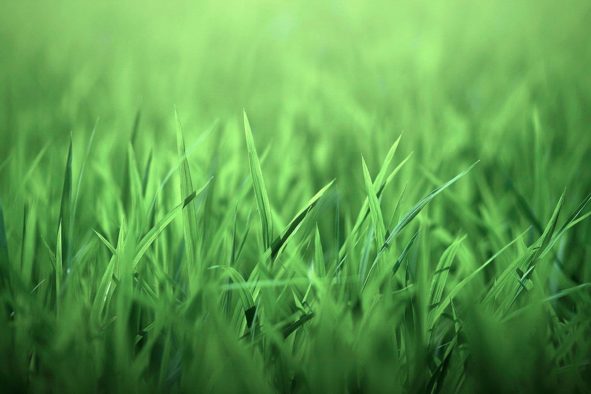 Обои на телефон трава