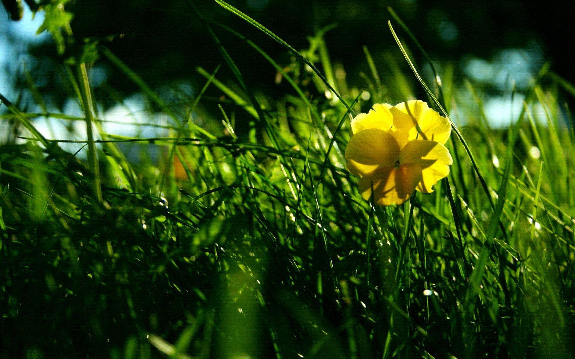 одним видов желто зеленые картинки на природе могут даже объявить