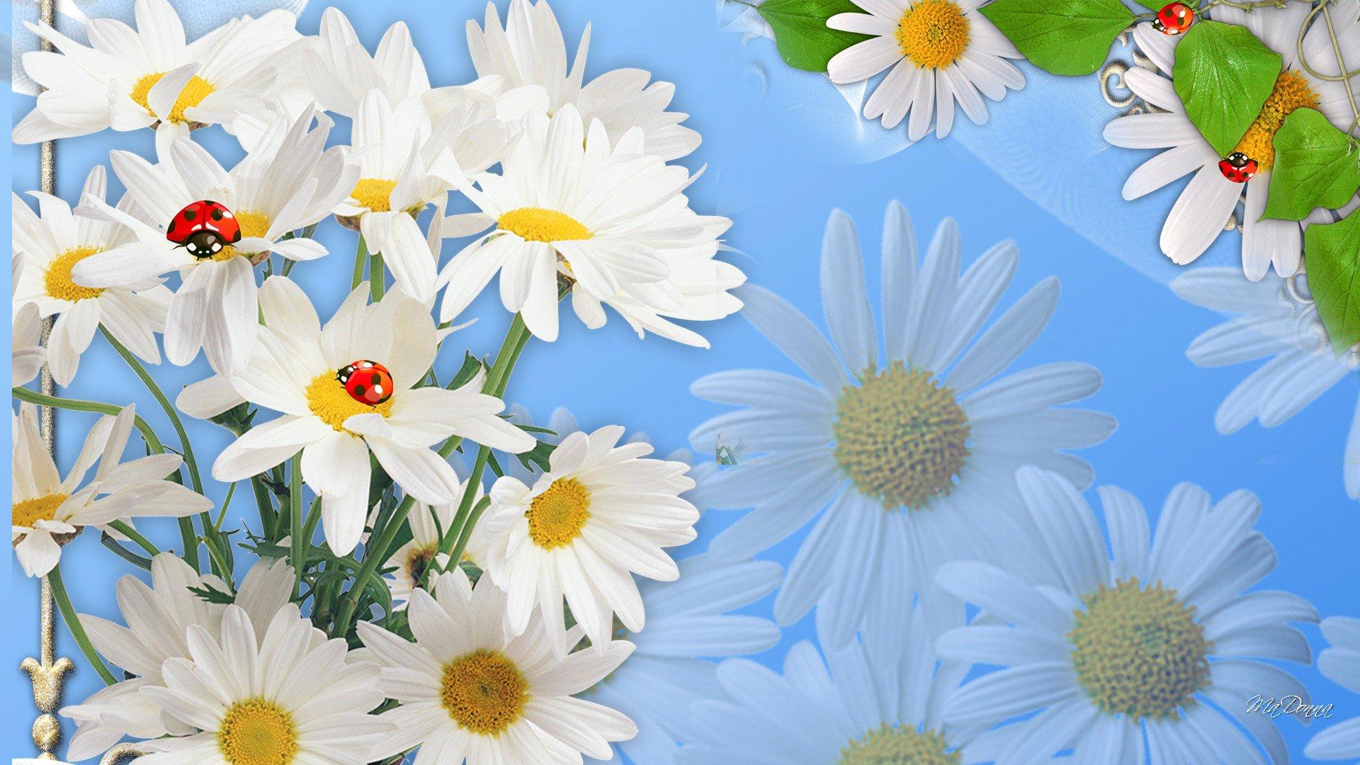 Обои цветы, Коллаж, рисунок, вектор. Разное foto 16