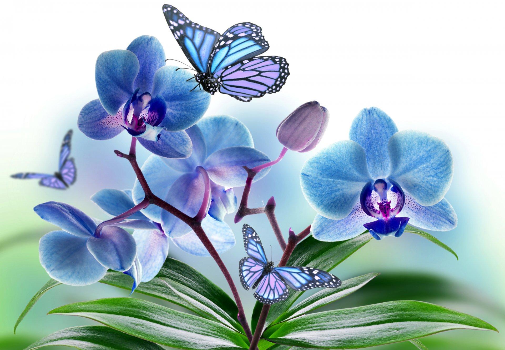 форме картина для распечатки орхидея лица