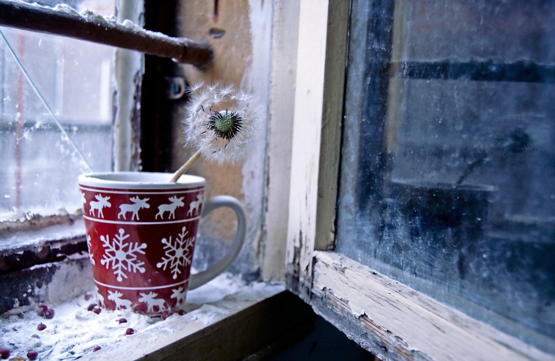 Открытка доброго зимнего утра орхидеи на окне за окном зима снег, картинки детьми животными