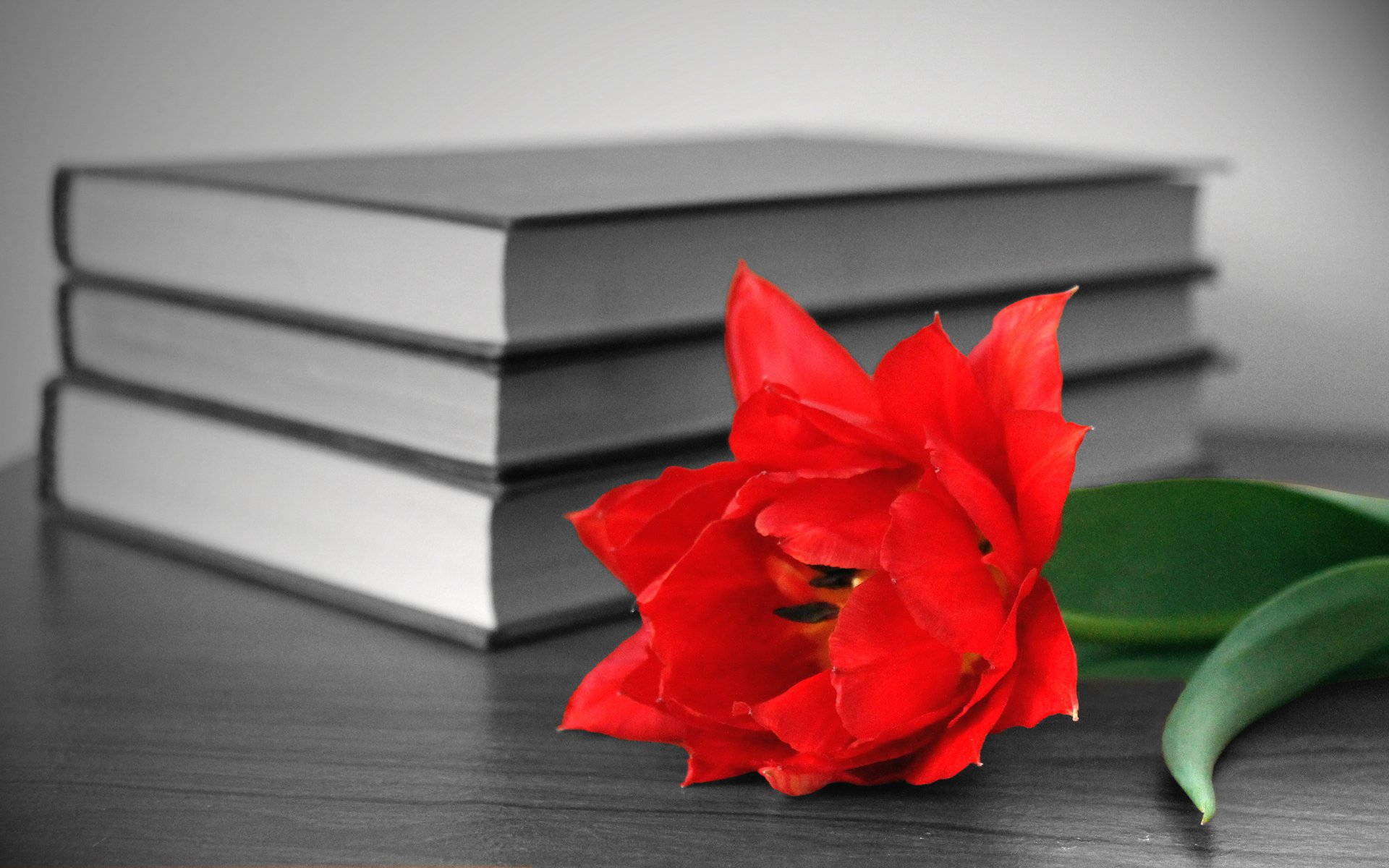 Цветок в книге  № 1489009 загрузить