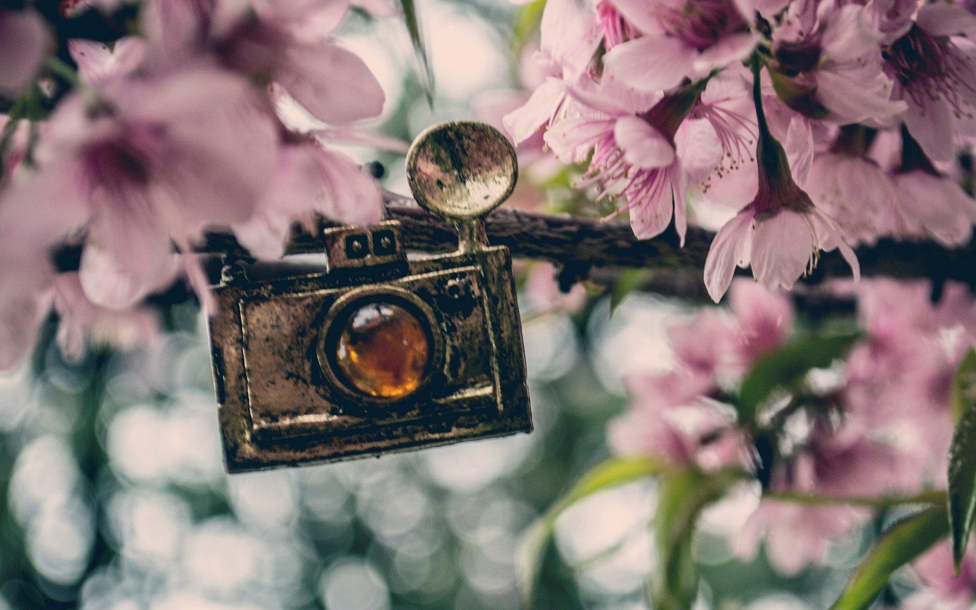 фотоаппарат сирень трава  № 3400808  скачать
