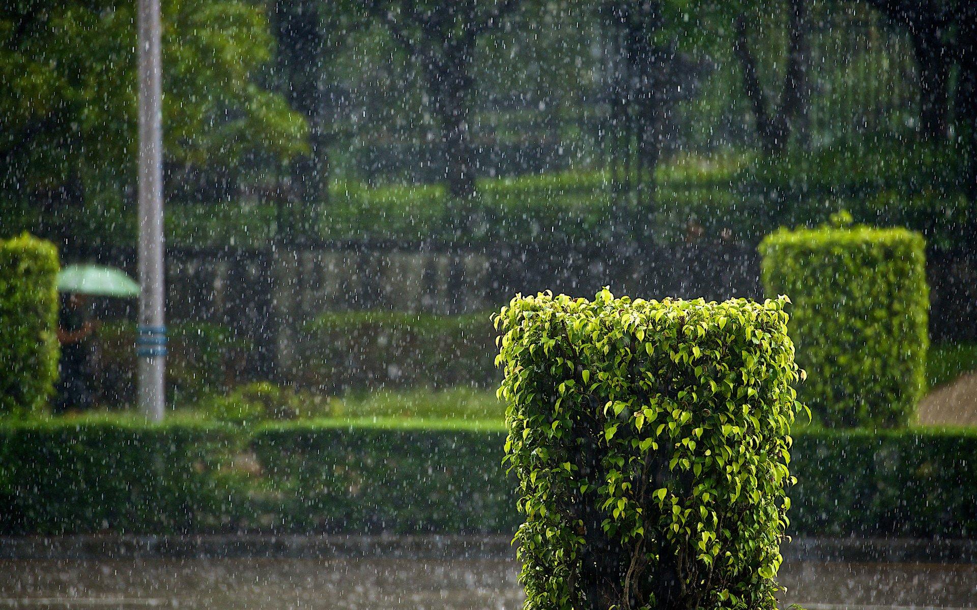 Дождь на городской олее бесплатно