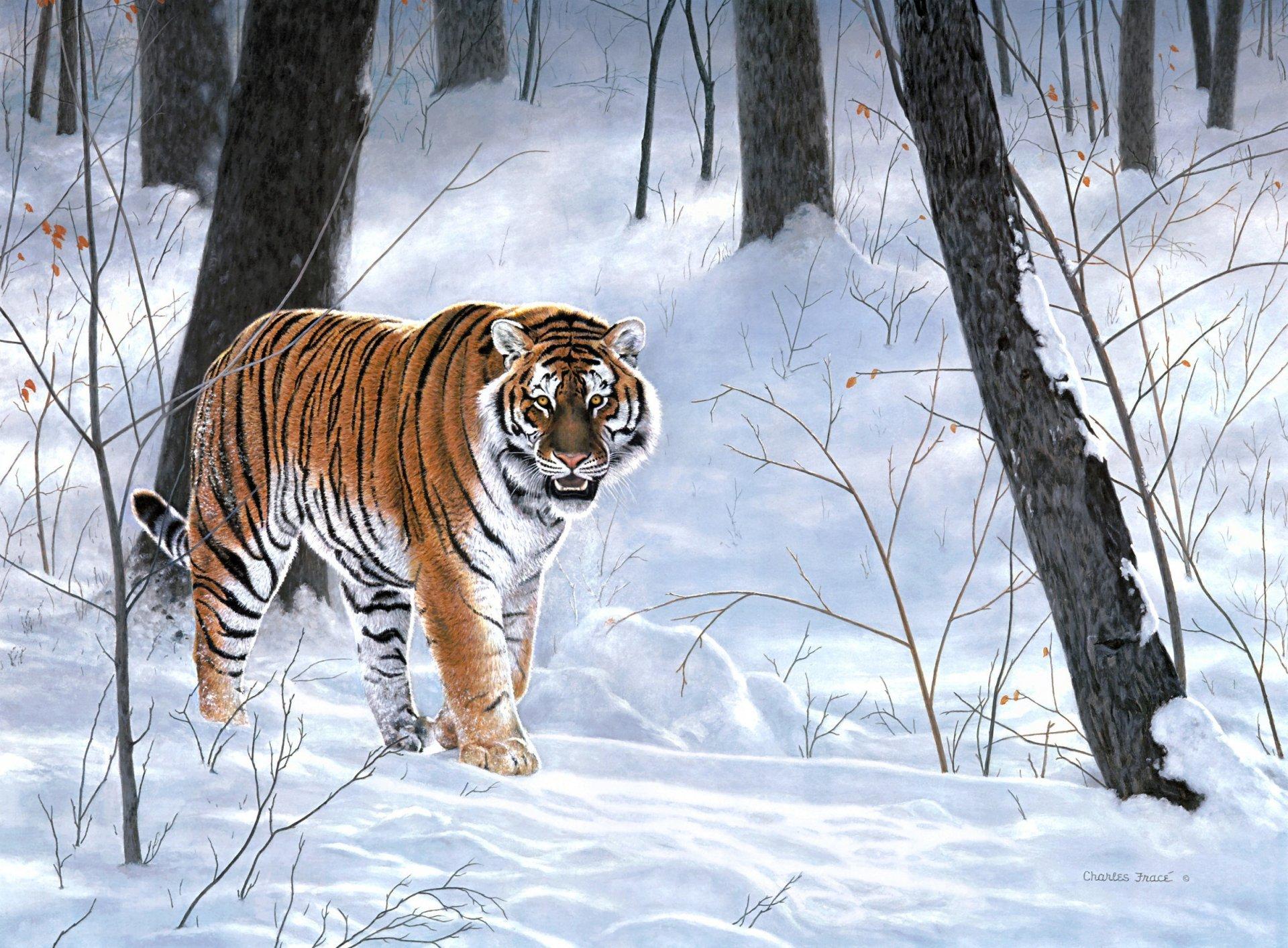 Картинки дикие животные тайги