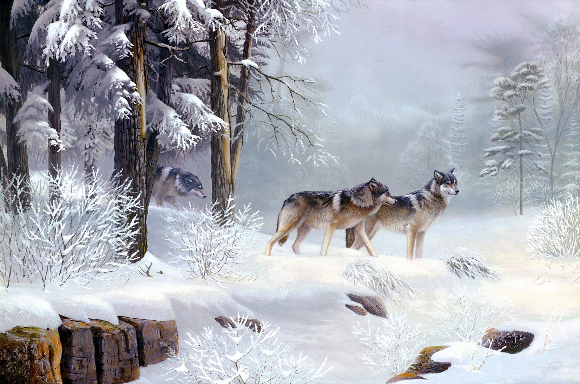 картинка лес волк снег некоторых