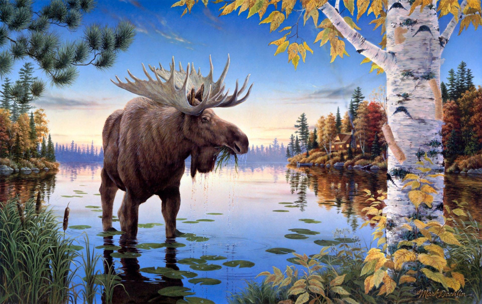 Картинки на тему природа и животные
