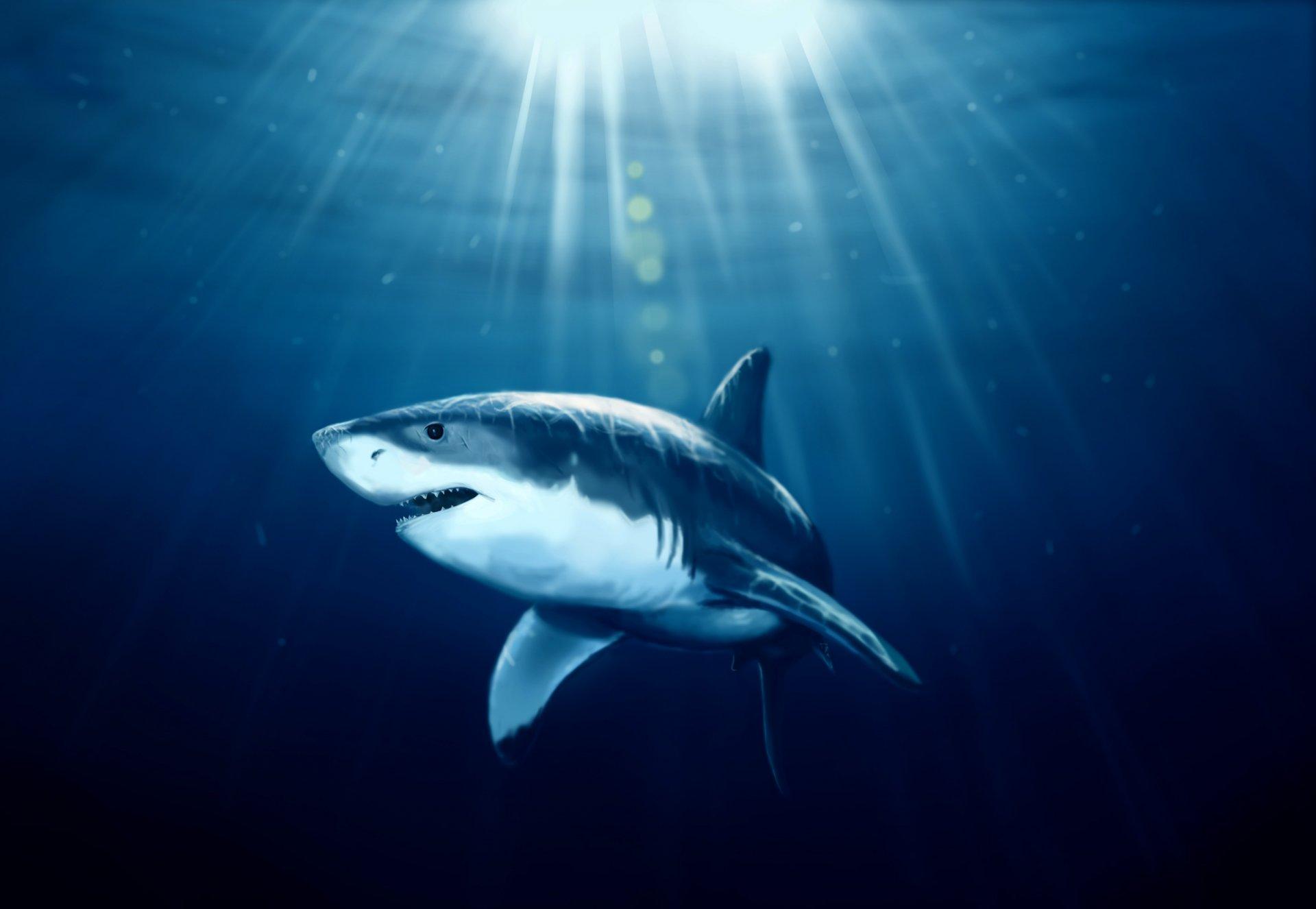 отзывам фотообои с акулой для телефона подобному цветению