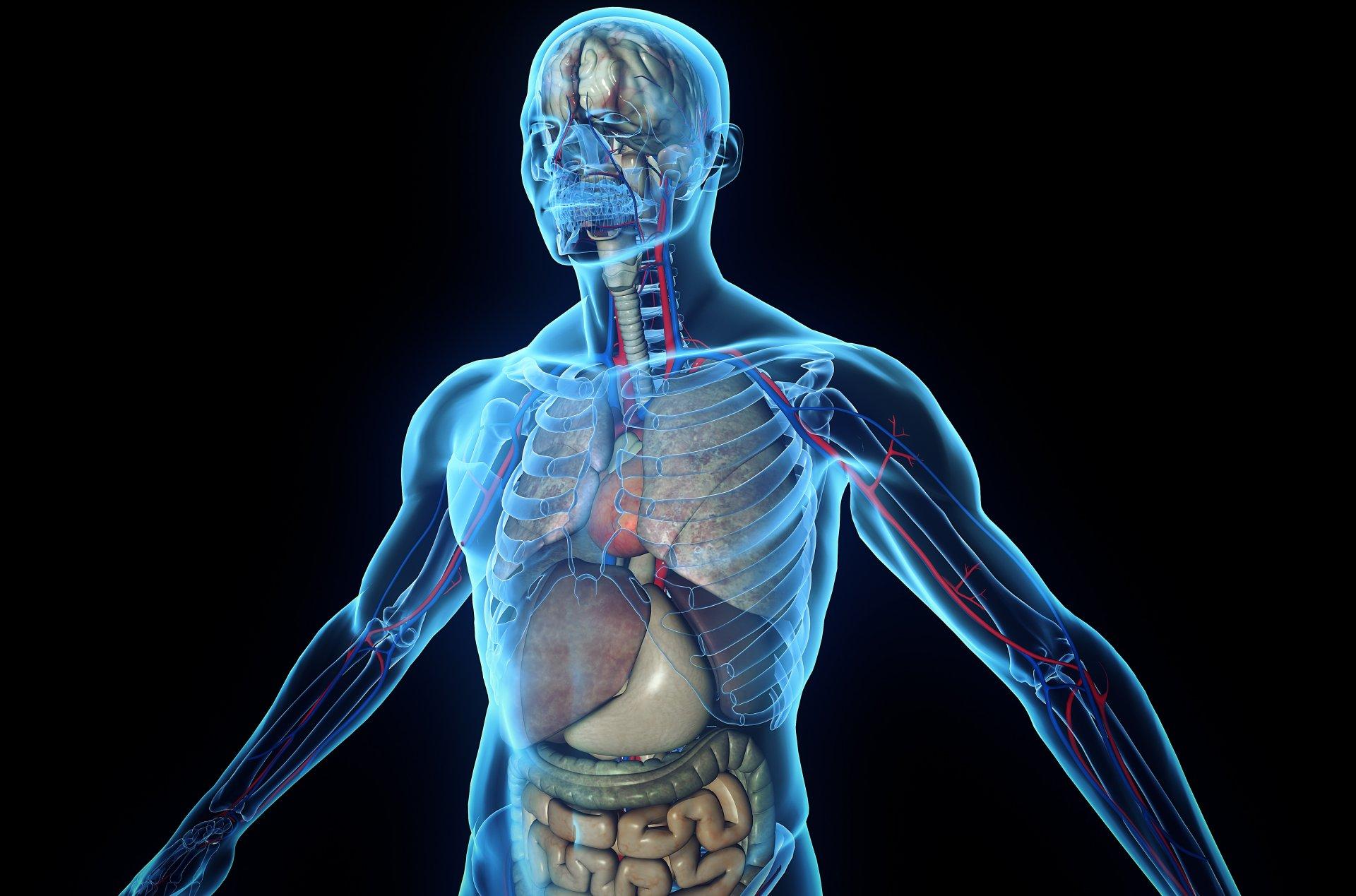 Картинка человеческого организма