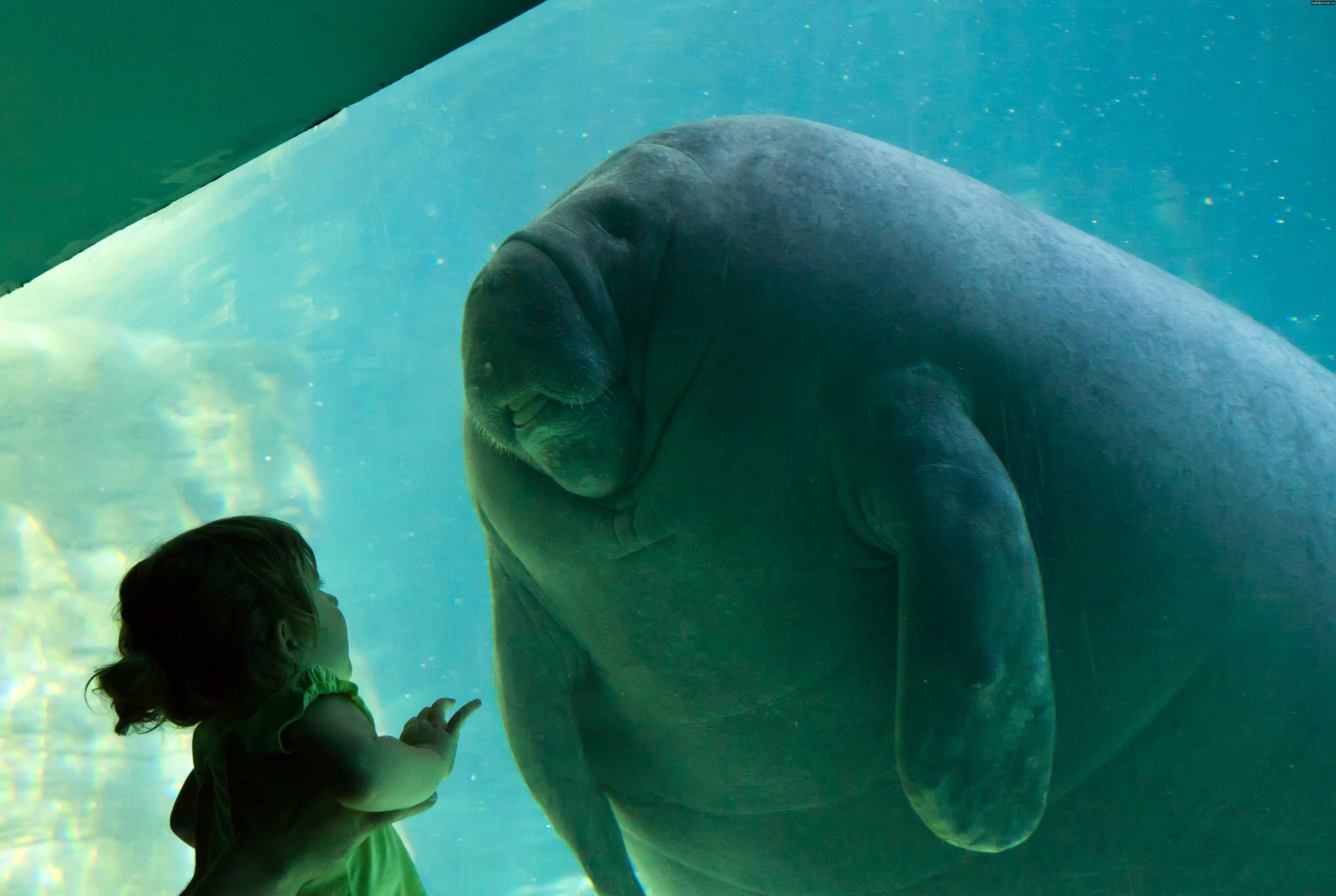 the manatee should be protected The english declared florida a manatee sanctuary in the 1700s and hunting manatees was prohibited sanctuary from hunters has not protected the manatee from speed boats, however speed limits in waterways can help manatees by giving them enough time to avoid collisions and reducing the severity of collisions when they do occur.