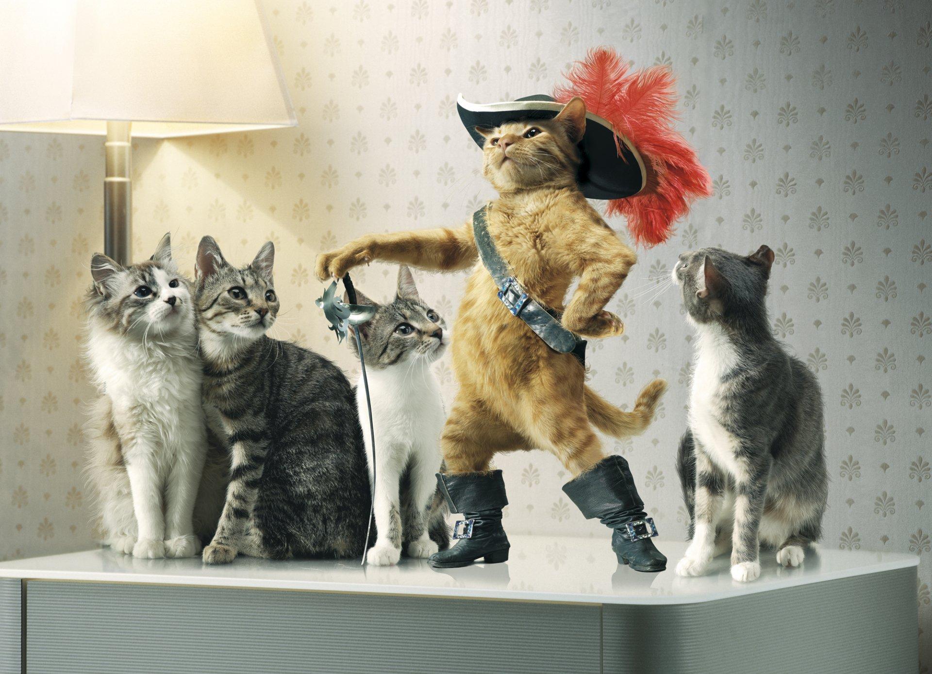 Днем рождения, смешные картинки с кошечками и котами