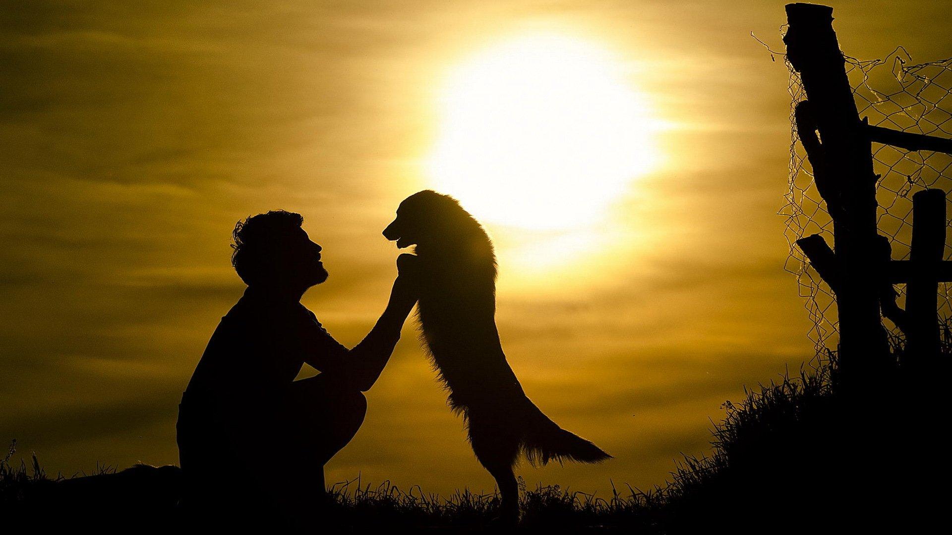 Собака на фоне заката  № 2038716 загрузить
