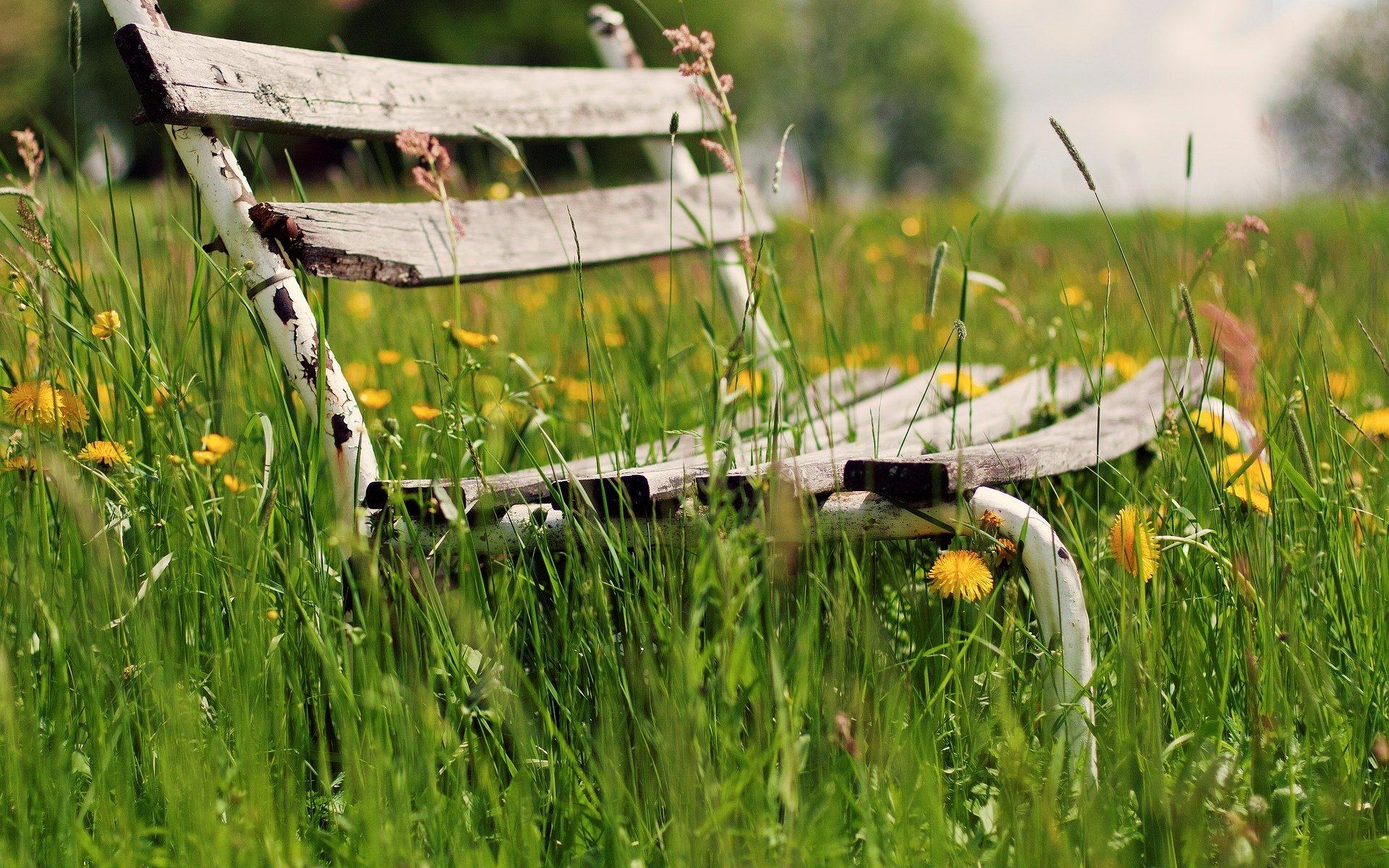 природа трава скамейка бесплатно