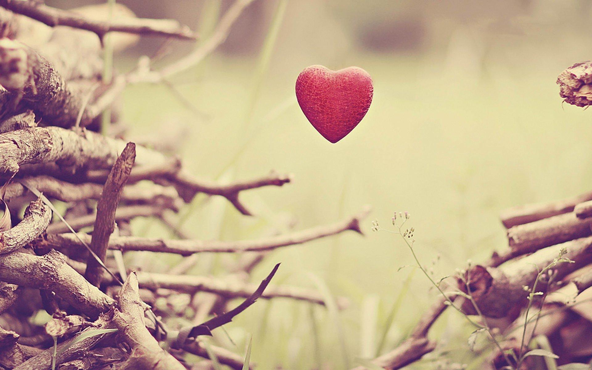любовь ветки сердца загрузить