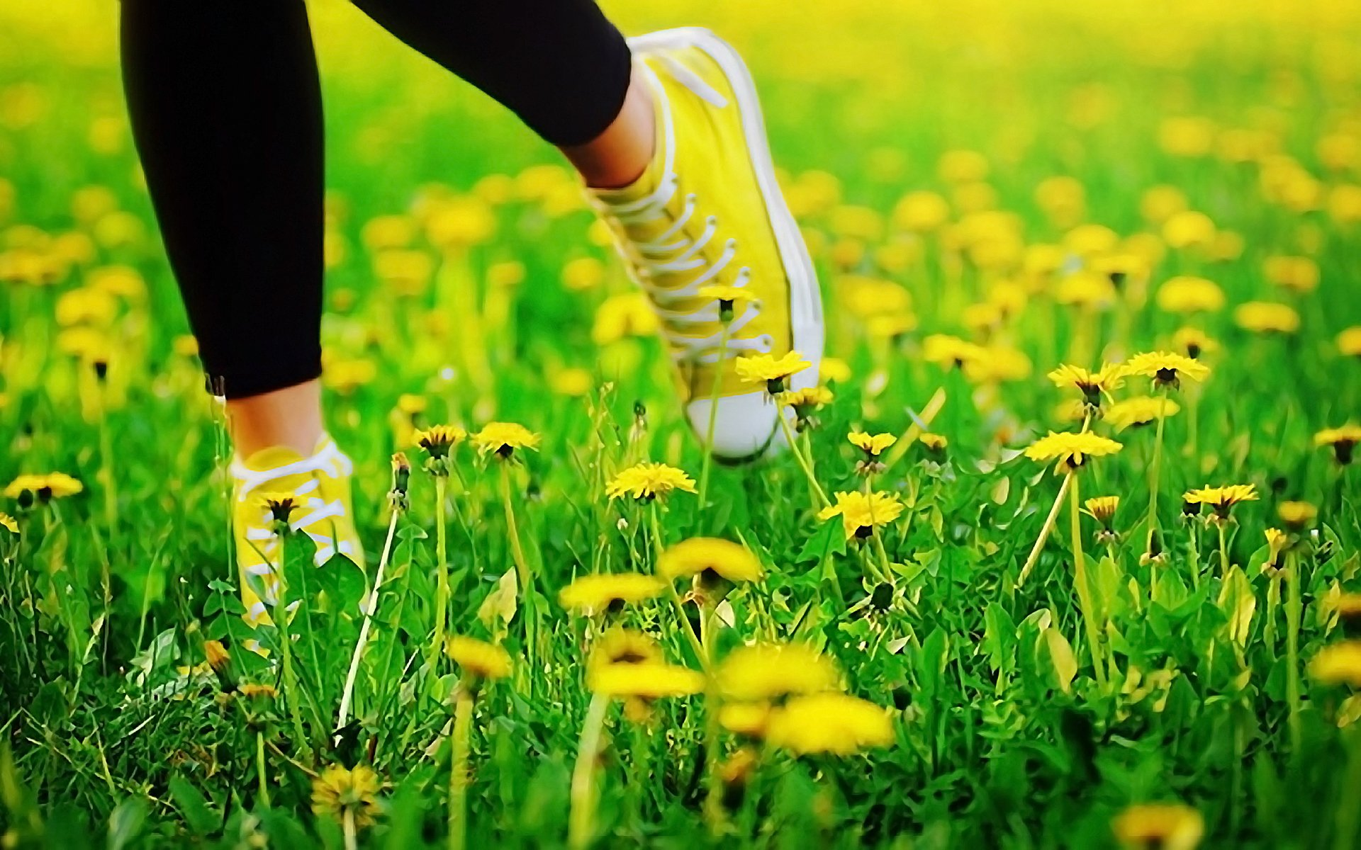 девушка природа белое платье цветы желтые  № 3832665 без смс