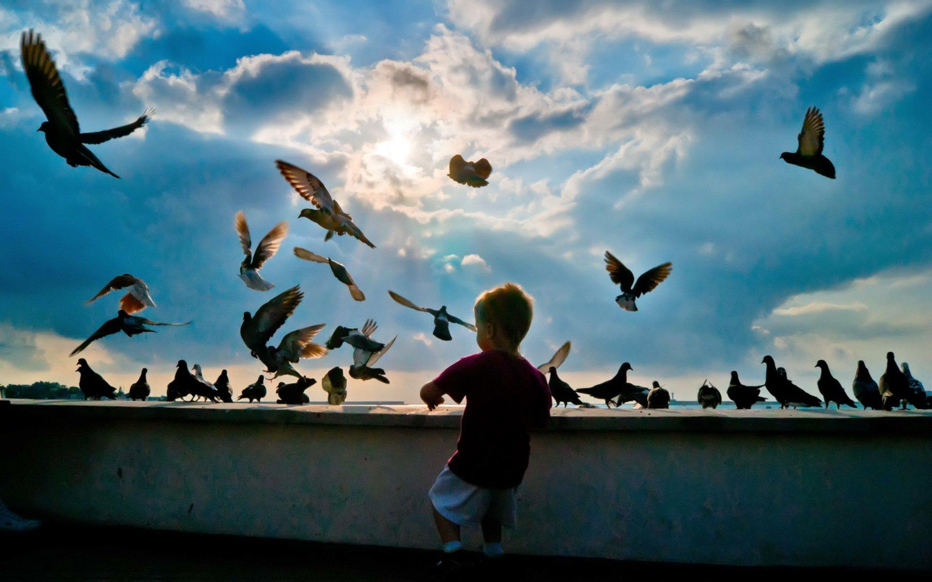 Отношения птиц и людей на улицах города