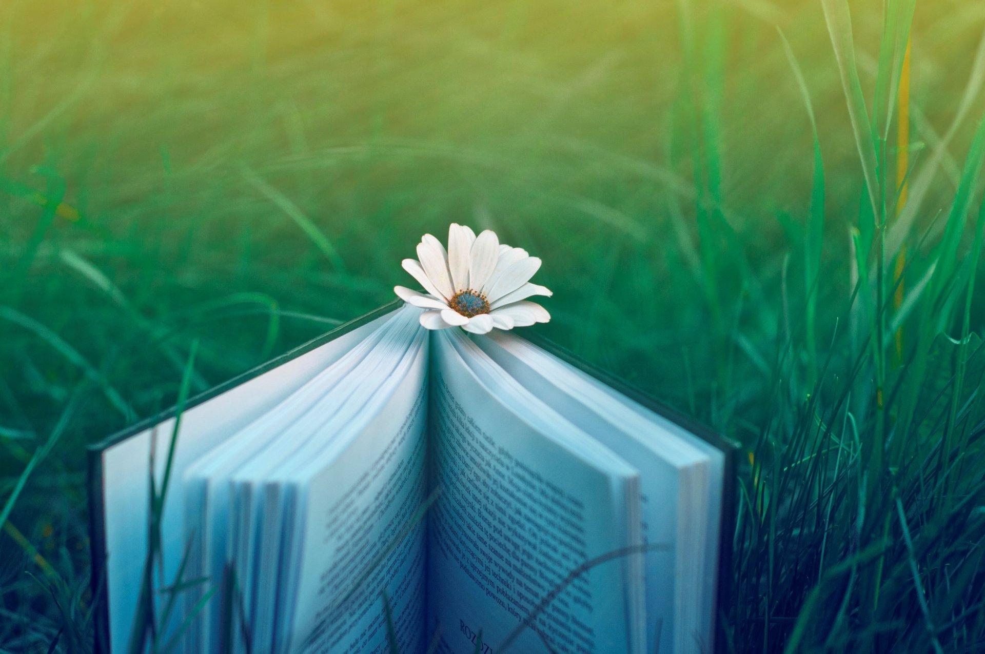 обои на рабочий стол цветы книги № 648778 загрузить
