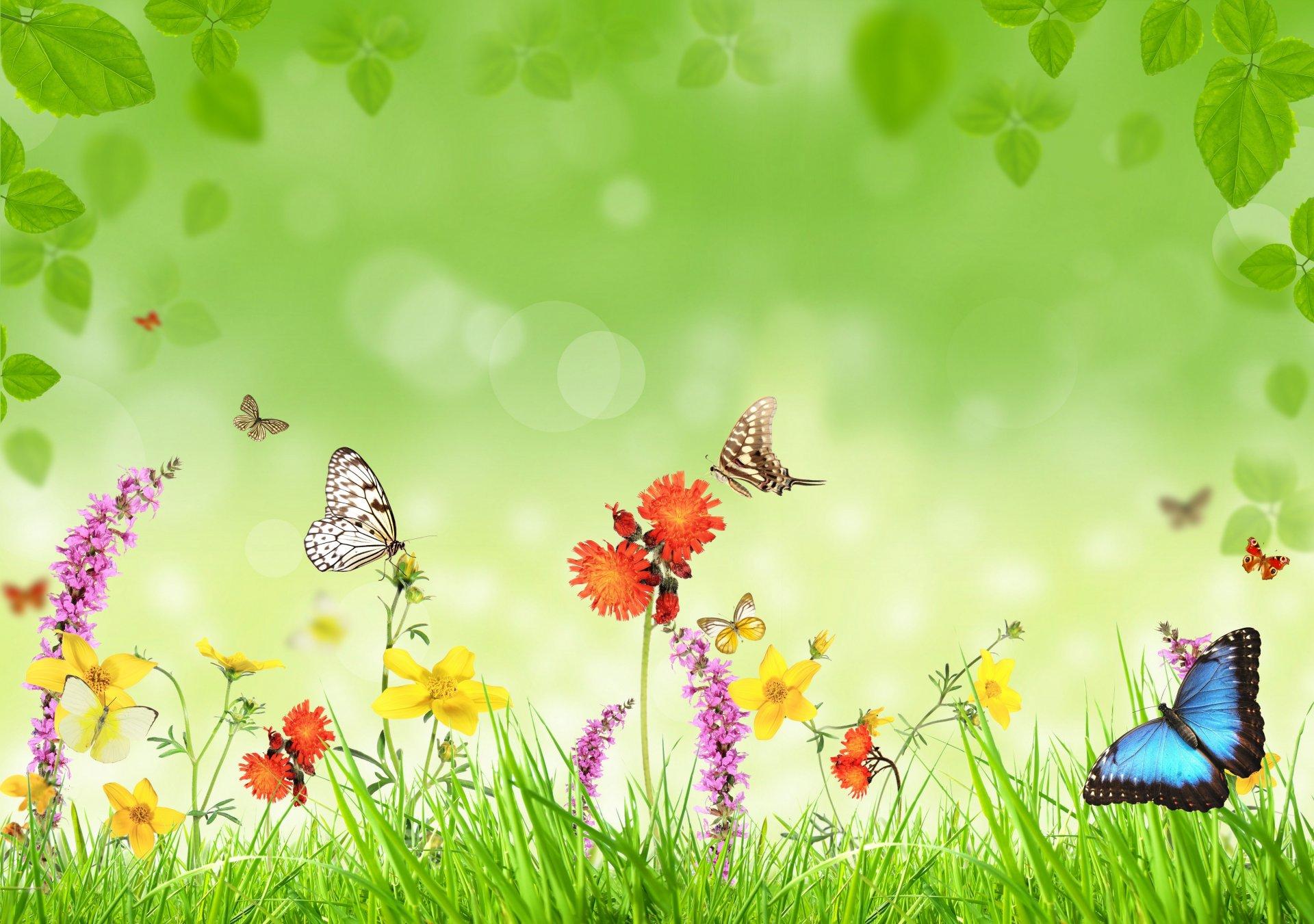 Картинки о лете с природой с бабочки рисованные