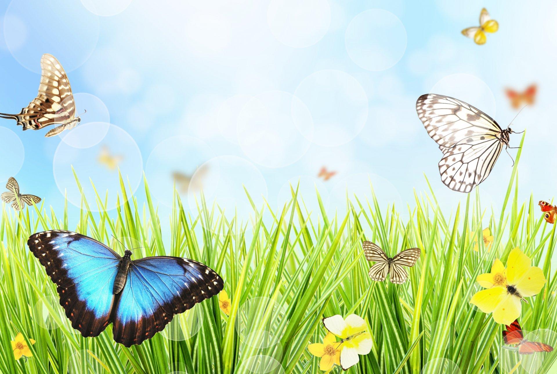 Картинки поляна с насекомыми для детей