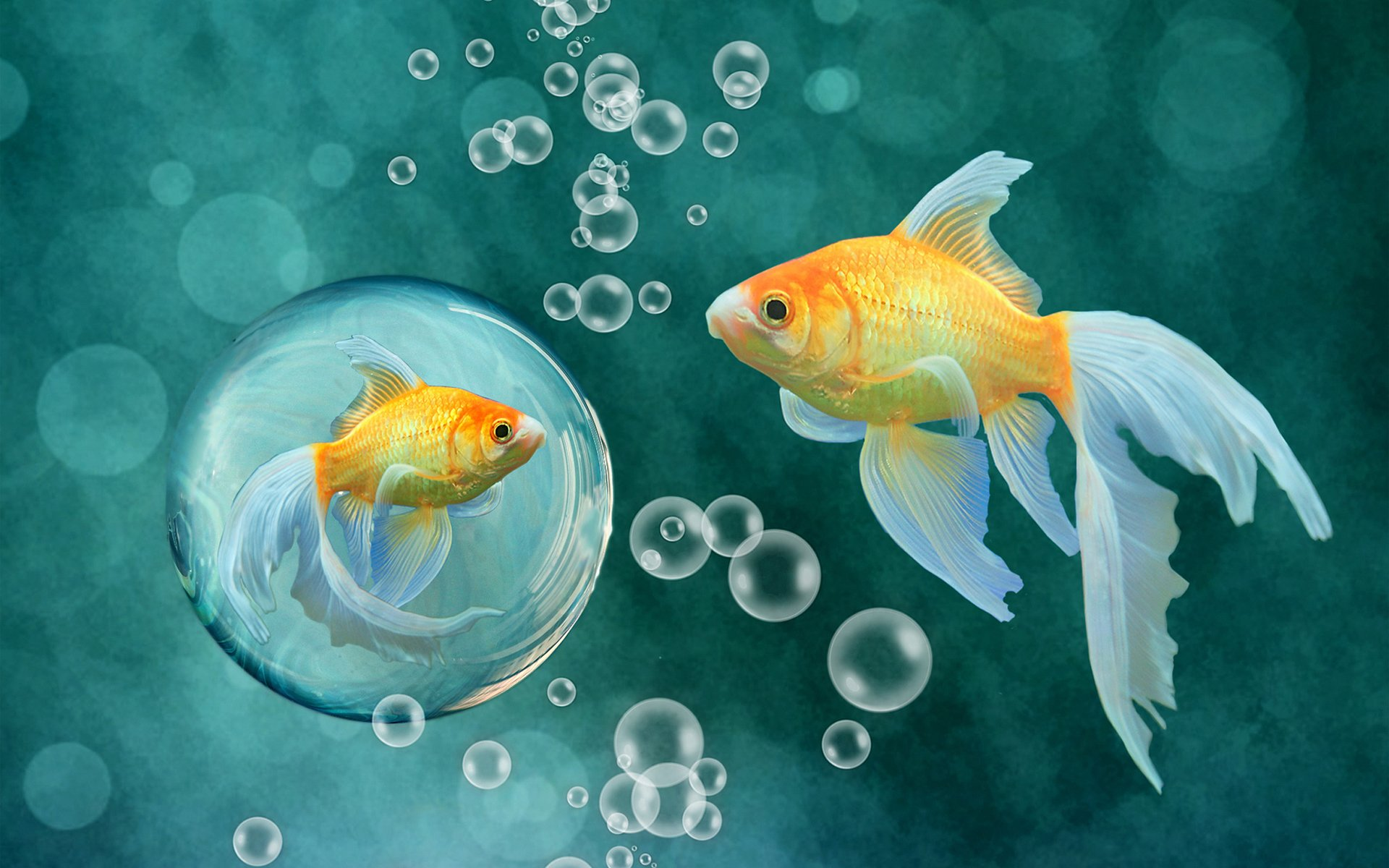 картинки на телефон с плавающими рыбками отлично снятая