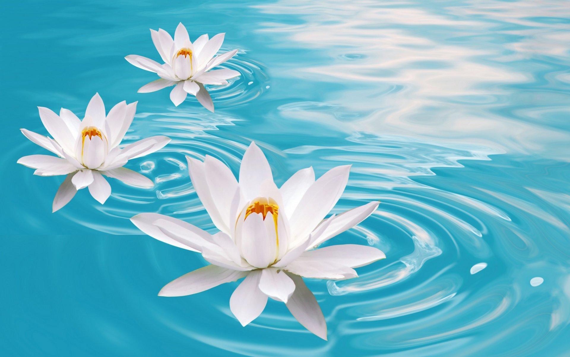 Фото красивых цветов на воде