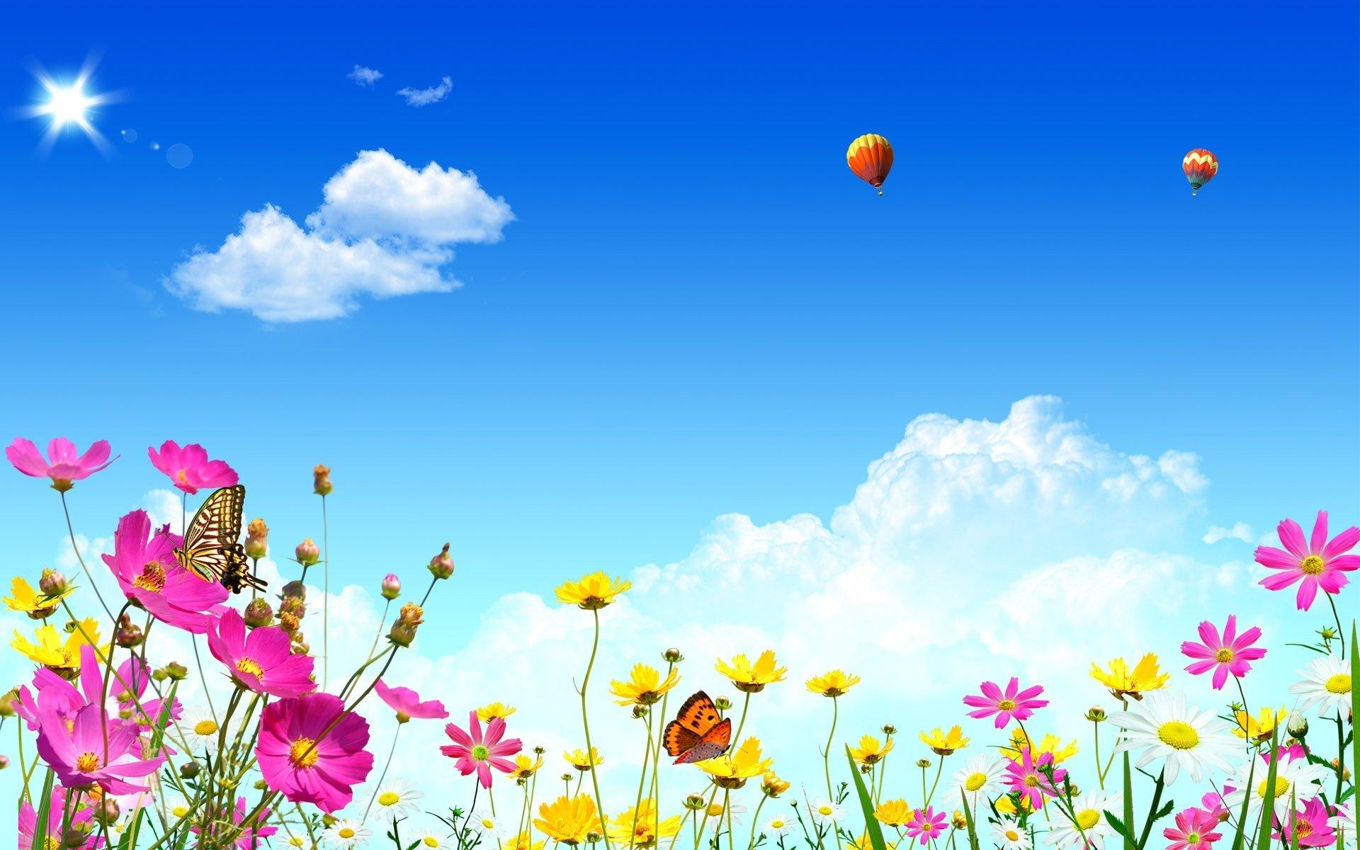 полевые цветы небо облака скачать