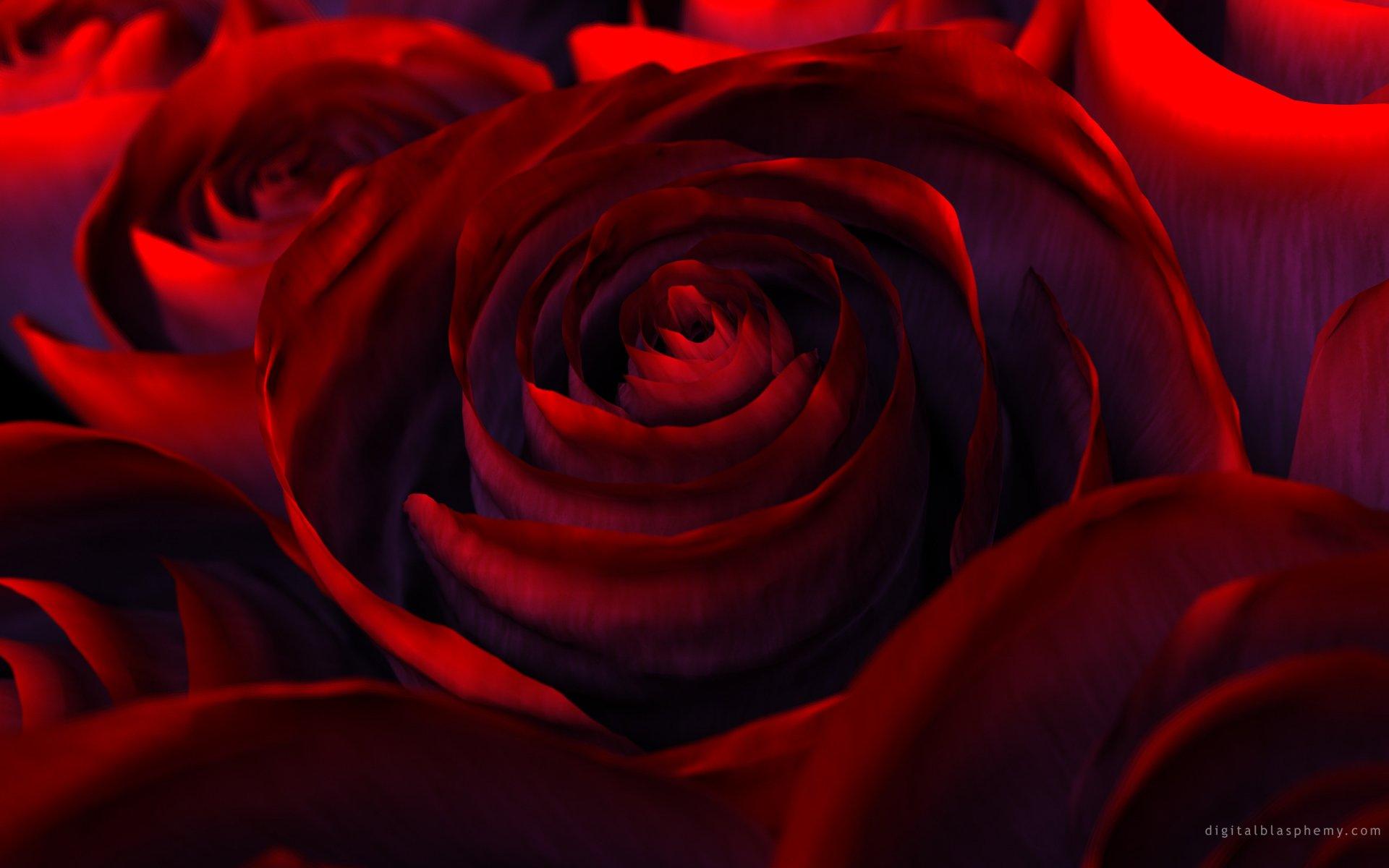 Обои цветок, красная. Цветы foto 18