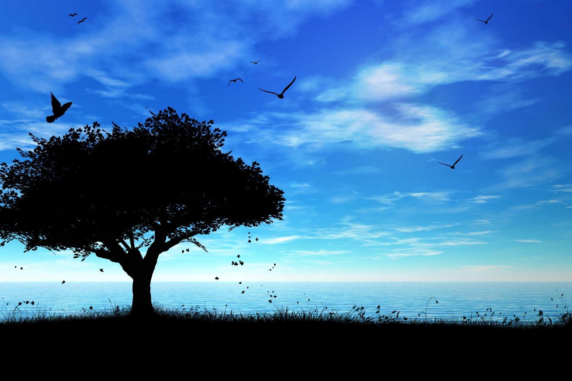 дерево море высота  № 964179 без смс