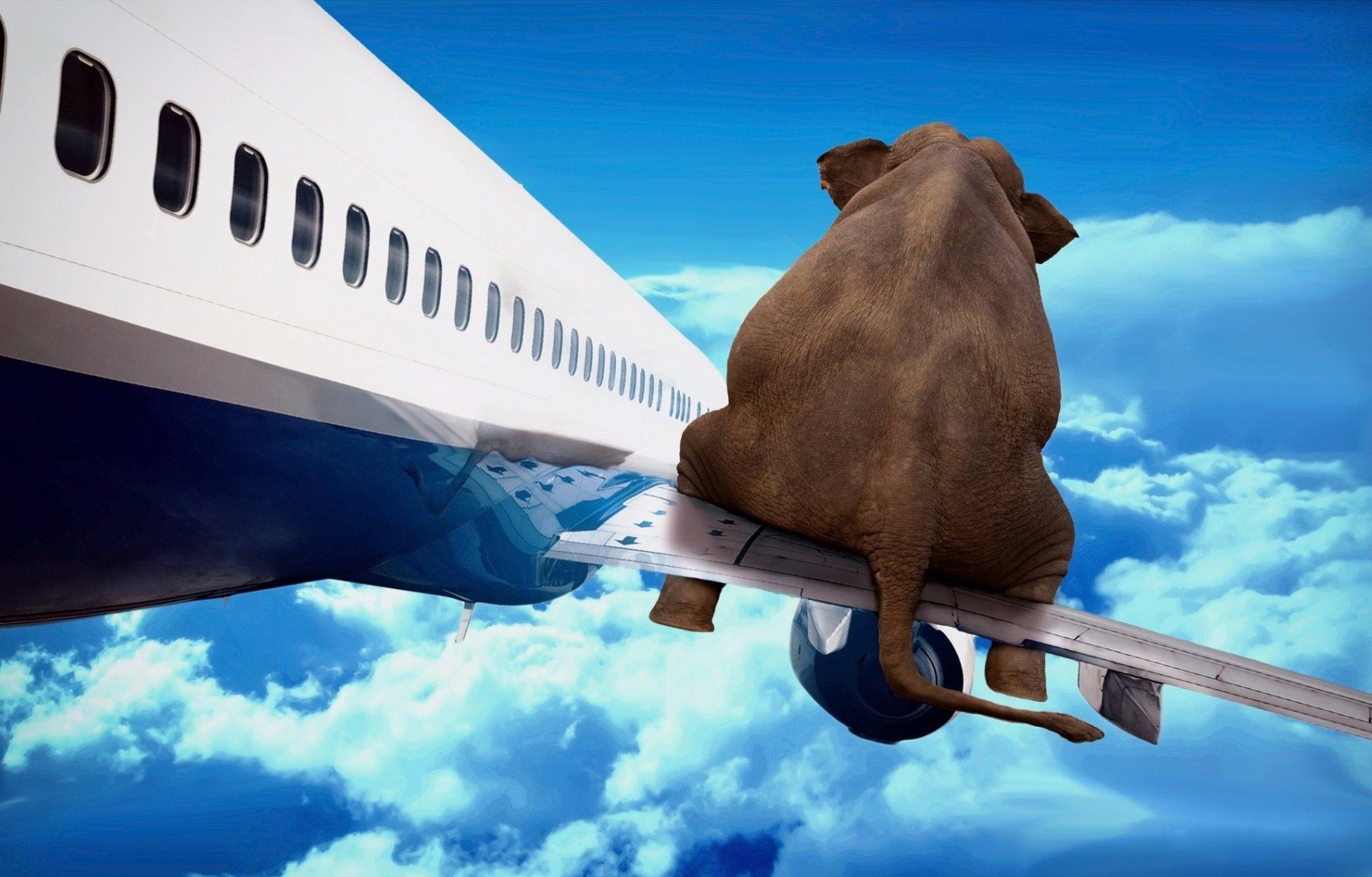 Картинки хорошего полета прикольные, обручальные картинки открытки