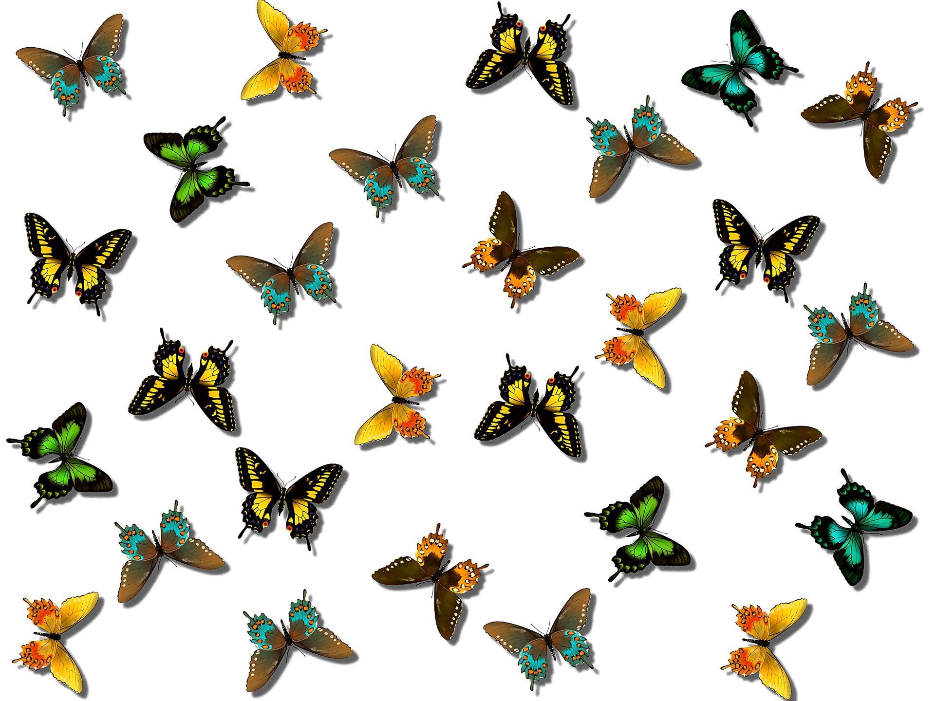 Днем, открытка много бабочек