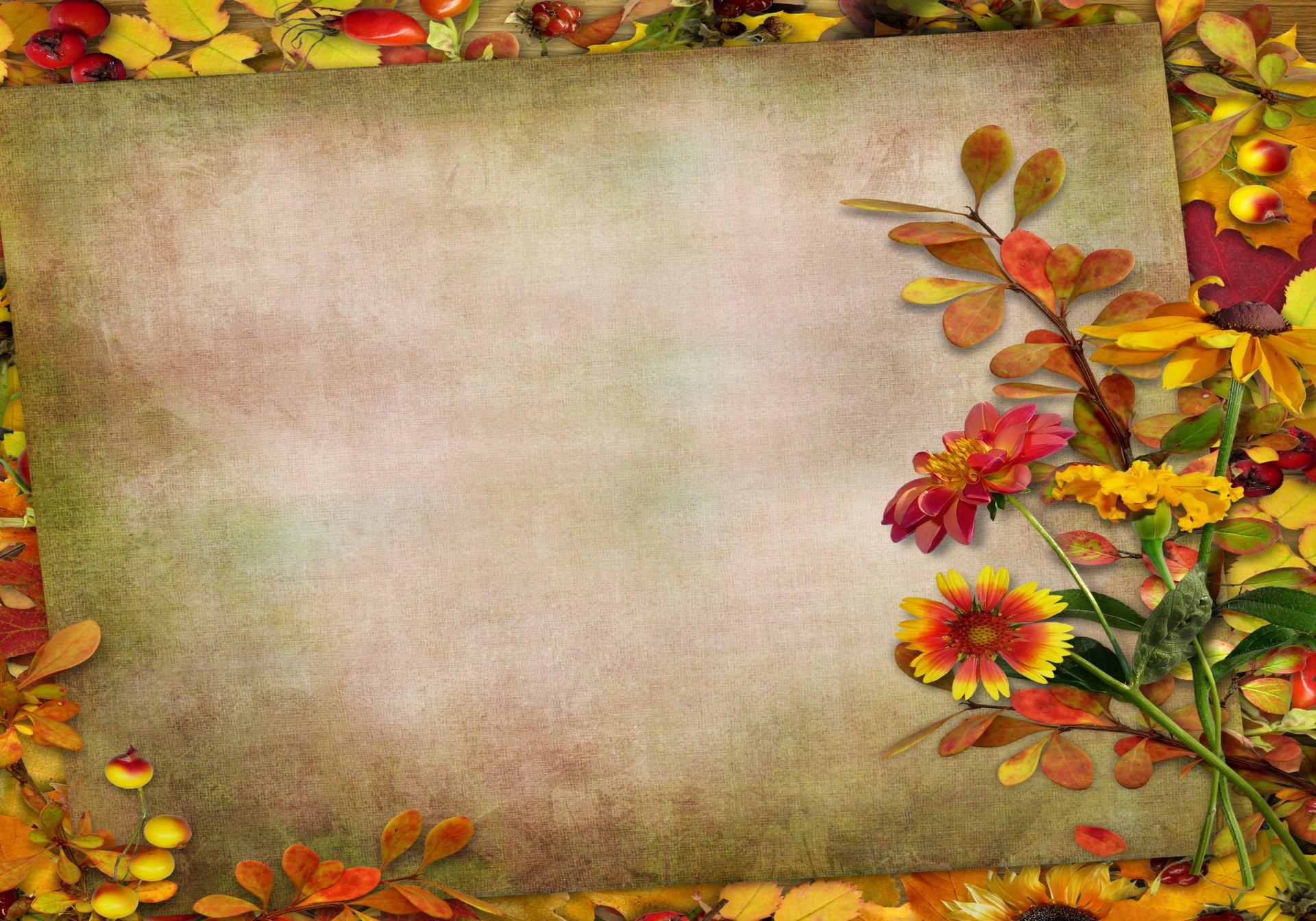 Осенние цветы фон для открытки