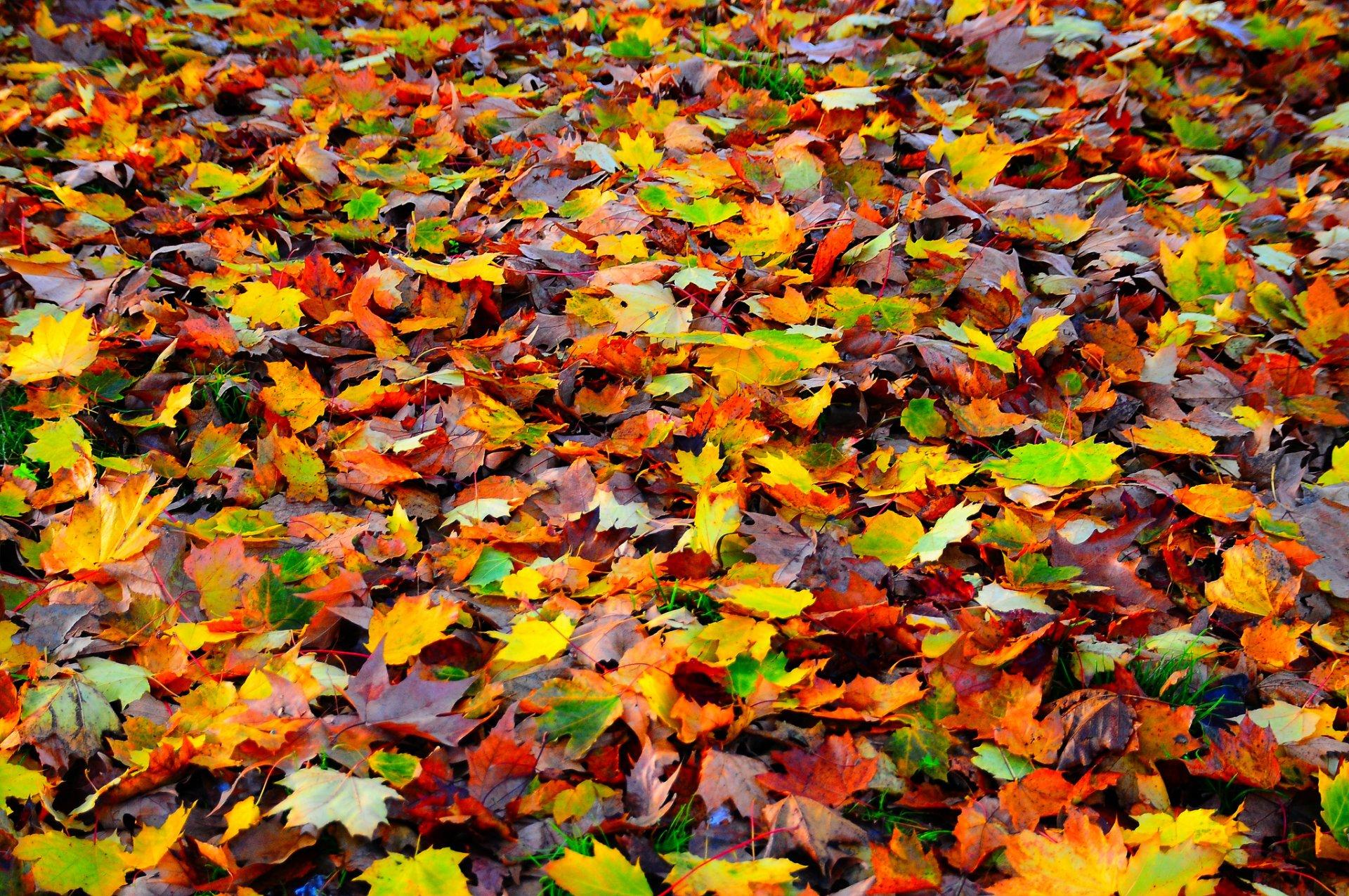 картинки земля покрытая осенними листьями всё