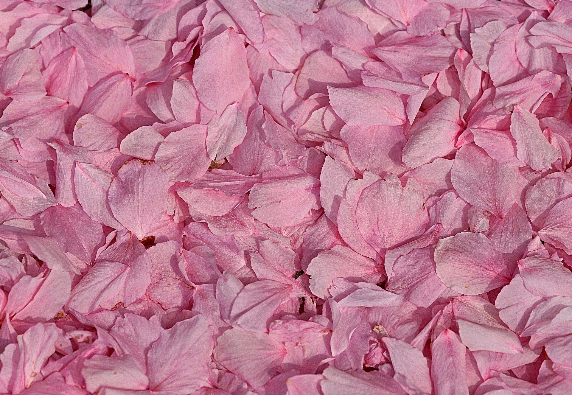 текстура розовая скачать