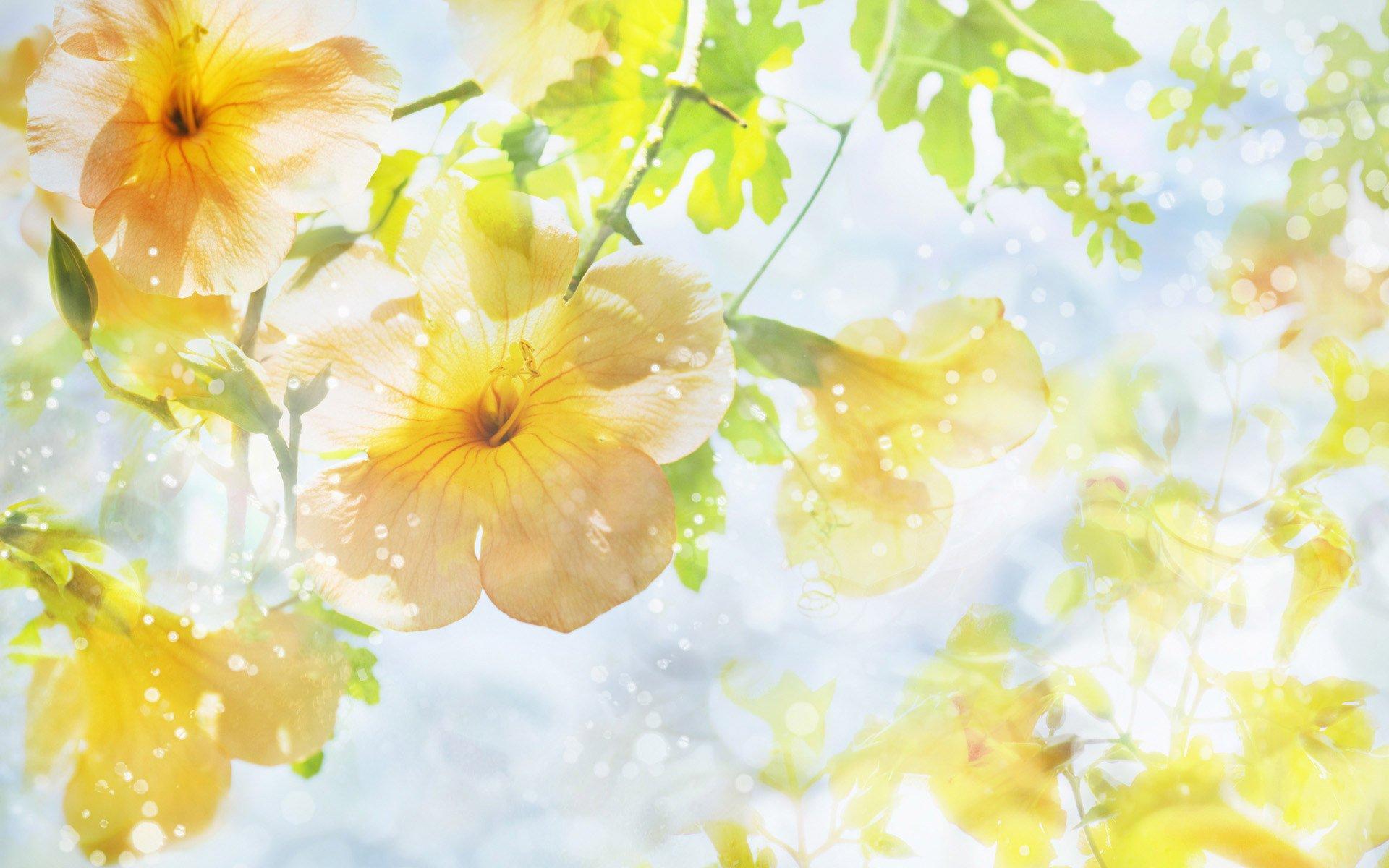 Красивые фоны для открыток весна, желаю