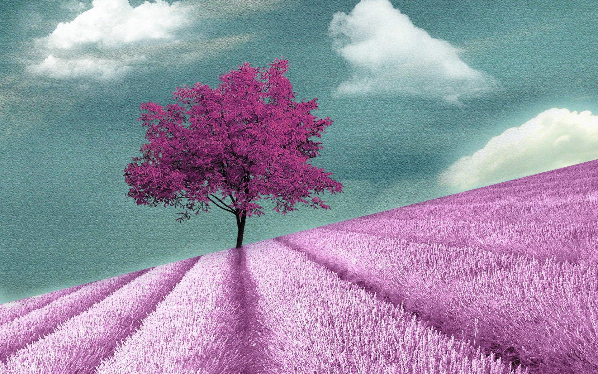 Картинка с цветом дерева
