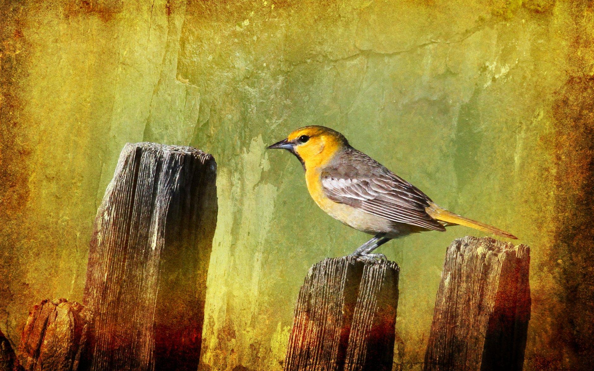 Картинках, картинка с птичками
