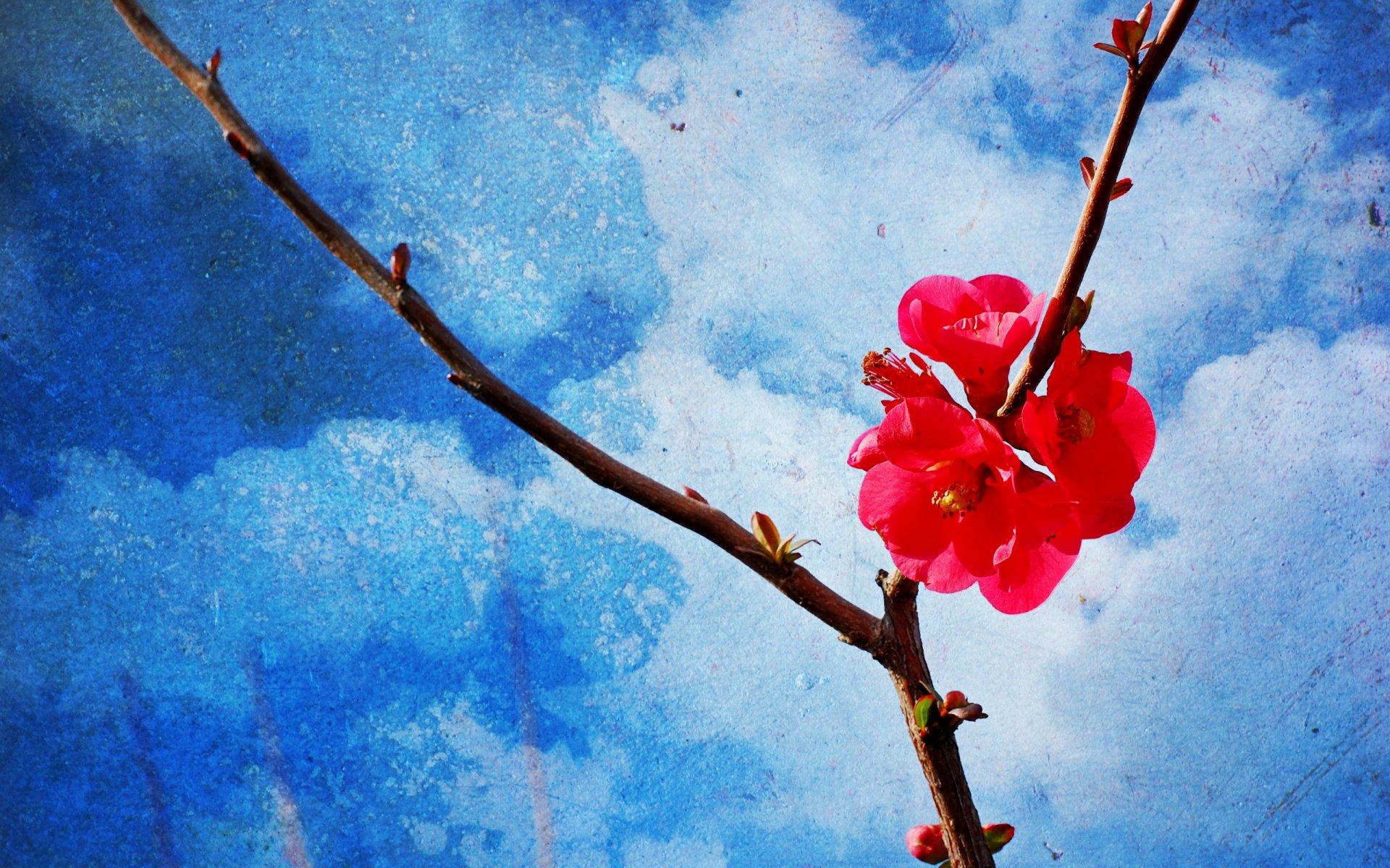 красивые картинки о весне для обоев того