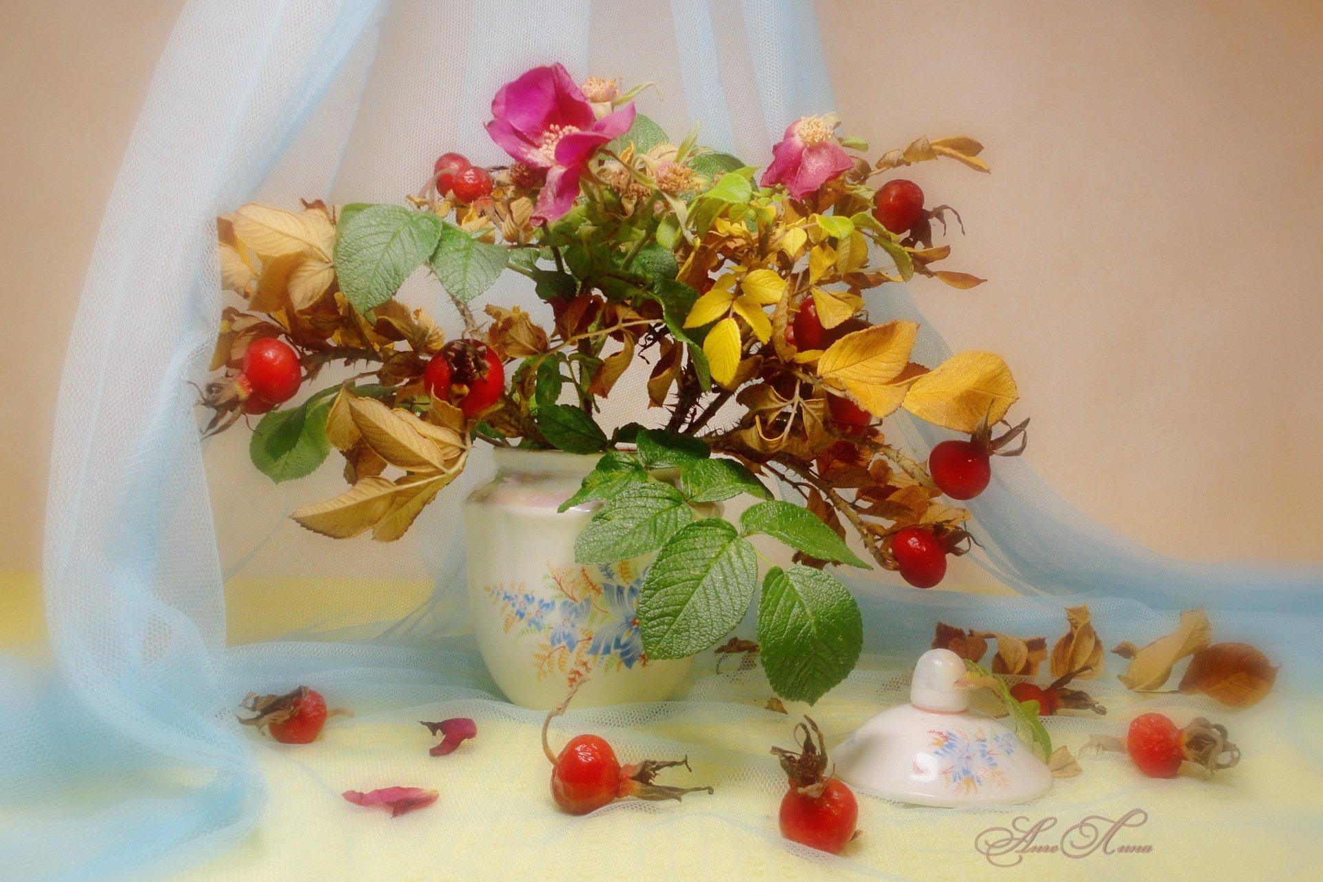 широкоформатные обои на рабочий стол высокого качества осенние цветы № 226192  скачать