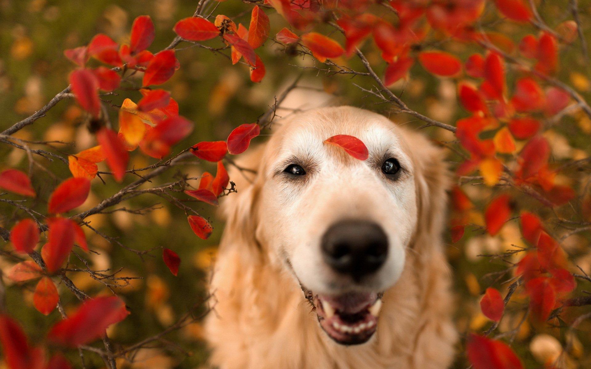 природа животные собака осень листья  № 2019463 загрузить