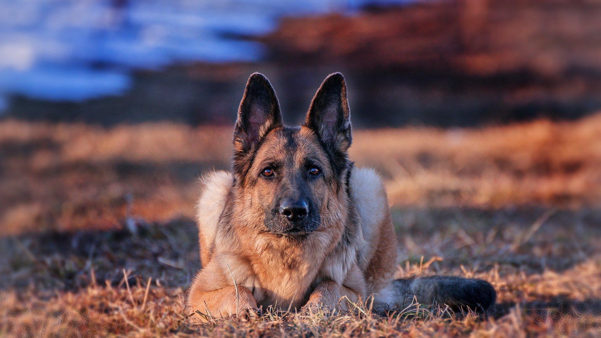 жилищах самые красивые собаки картинки на обои менее частое встречаемое