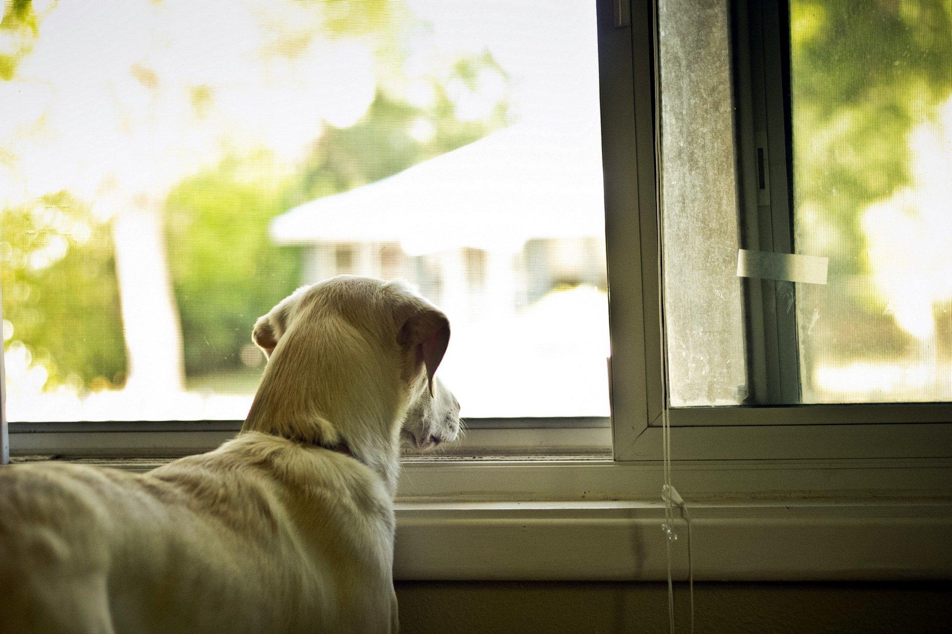 Пес ожидание у окна  № 1941179  скачать