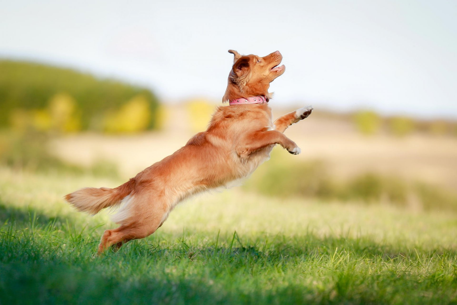 картинки бегущей собаки с боку дом большой