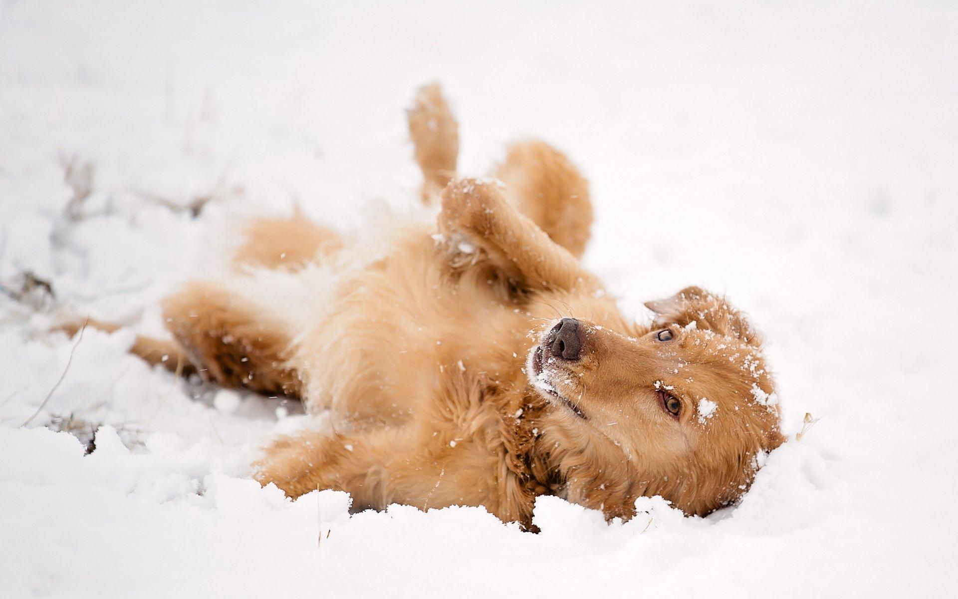 презентация фотки собачки в снегу это время рыба