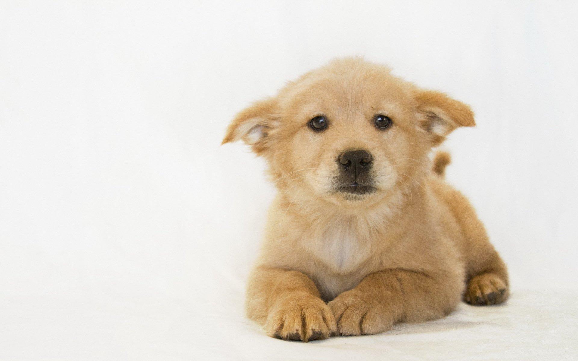собака щенок dog puppy без смс