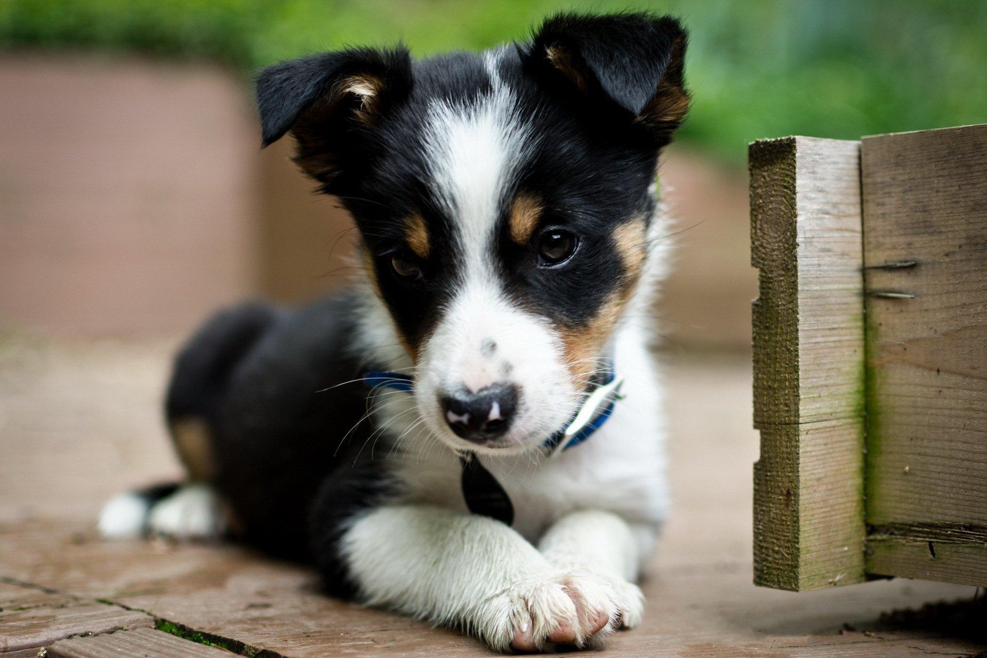 запросу картинки симпатичного щенка сообщил источник
